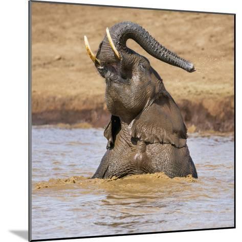 Kenya, Nyeri County-Nigel Pavitt-Mounted Photographic Print