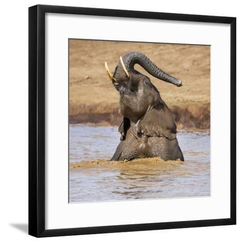 Kenya, Nyeri County-Nigel Pavitt-Framed Art Print
