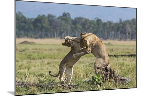 Kenya, Masai Mara-Nigel Pavitt-Mounted Photographic Print