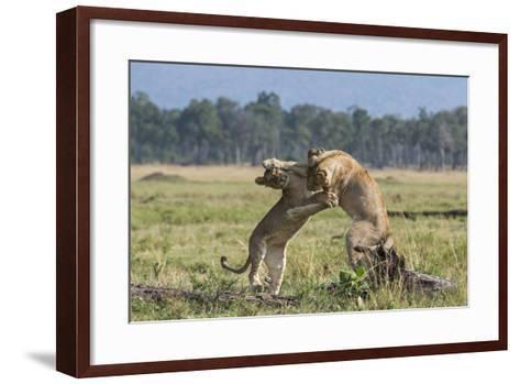 Kenya, Masai Mara-Nigel Pavitt-Framed Art Print