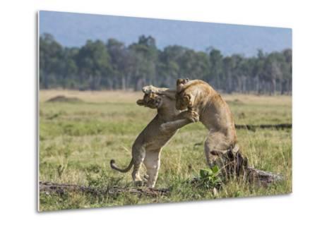 Kenya, Masai Mara-Nigel Pavitt-Metal Print