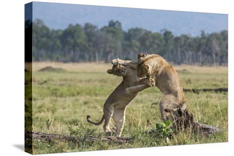Kenya, Masai Mara-Nigel Pavitt-Stretched Canvas Print