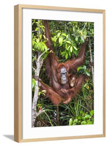 Indonesia, Central Kalimatan-Nigel Pavitt-Framed Art Print