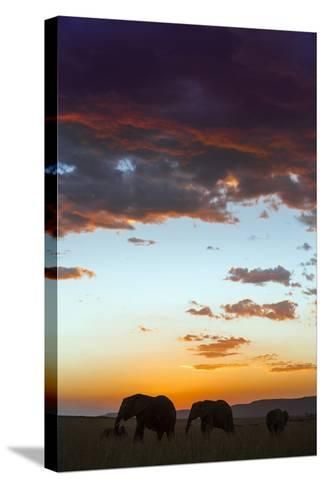 Kenya, Narok County, Masai Mara. Elephants Silhouetted Against a Beautiful Sky at Sunset.-Nigel Pavitt-Stretched Canvas Print