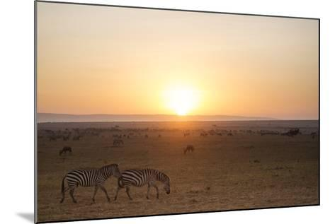 Kenya, Mara North Conservancy. Plains Game Graze in Morning Light, Mara North Conservancy-Niels Van Gijn-Mounted Photographic Print