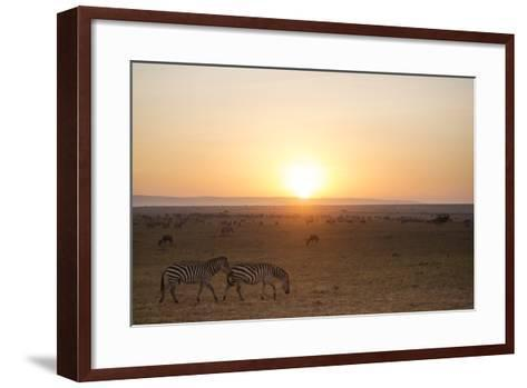 Kenya, Mara North Conservancy. Plains Game Graze in Morning Light, Mara North Conservancy-Niels Van Gijn-Framed Art Print