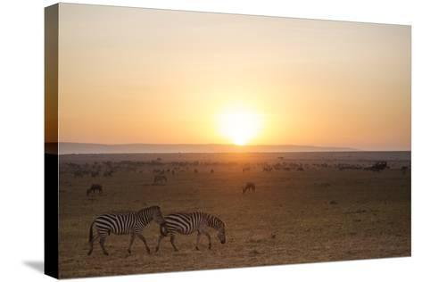 Kenya, Mara North Conservancy. Plains Game Graze in Morning Light, Mara North Conservancy-Niels Van Gijn-Stretched Canvas Print