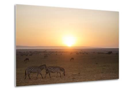 Kenya, Mara North Conservancy. Plains Game Graze in Morning Light, Mara North Conservancy-Niels Van Gijn-Metal Print