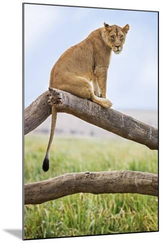 Kenya, Meru County, Lewa Wildlife Conservancy. a Lioness Sitting on the Branch of a Dead Tree.-Nigel Pavitt-Mounted Photographic Print