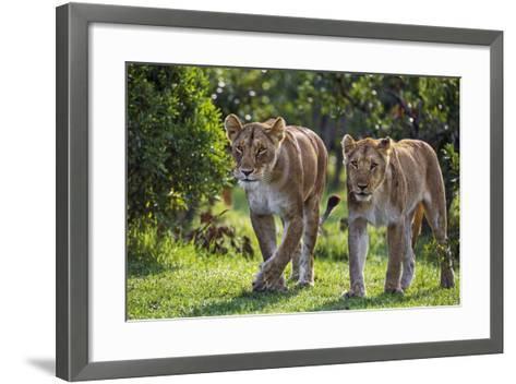 Kenya, Narok County-Nigel Pavitt-Framed Art Print