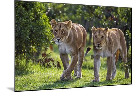 Kenya, Narok County-Nigel Pavitt-Mounted Photographic Print