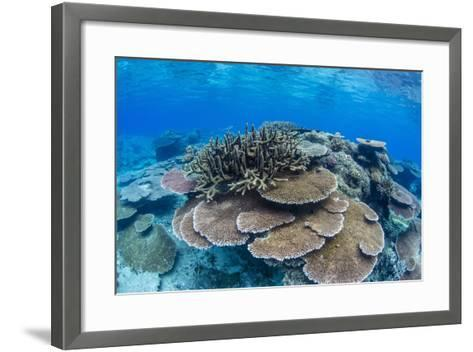 Underwater Profusion of Hard Plate Corals at Pulau Setaih Island, Natuna Archipelago, Indonesia-Michael Nolan-Framed Art Print