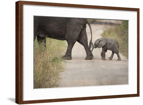 African Elephant, Queen Elizabeth National Park, Uganda, Africa-Janette Hill-Framed Art Print