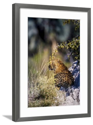 Leopard (Panthera Pardus) Resting on a Termite Mound, Moremi, Okavango Delta, Botswana, Africa-Andrew Sproule-Framed Art Print