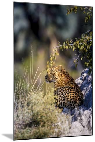 Leopard (Panthera Pardus) Resting on a Termite Mound, Moremi, Okavango Delta, Botswana, Africa-Andrew Sproule-Mounted Photographic Print