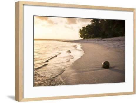 Coconut on a Tropical Beach at Sunset, Rarotonga Island, Cook Islands, South Pacific, Pacific-Matthew Williams-Ellis-Framed Art Print