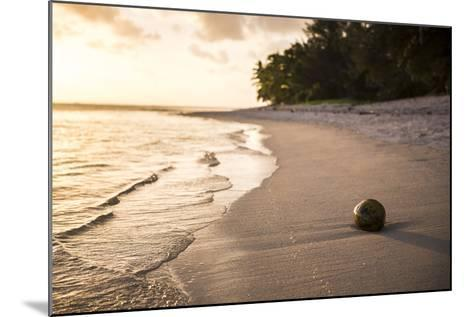 Coconut on a Tropical Beach at Sunset, Rarotonga Island, Cook Islands, South Pacific, Pacific-Matthew Williams-Ellis-Mounted Photographic Print