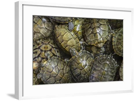 Terrapins at Market, Guilin, Guangxi, China, Asia-Janette Hill-Framed Art Print