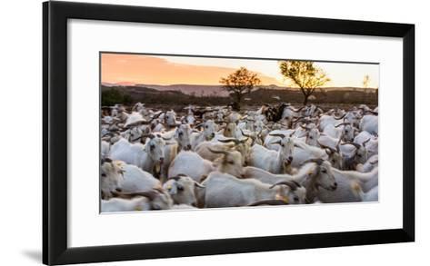 Goats in Andalucia, Spain, Europe-John Alexander-Framed Art Print