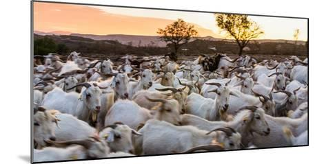 Goats in Andalucia, Spain, Europe-John Alexander-Mounted Photographic Print