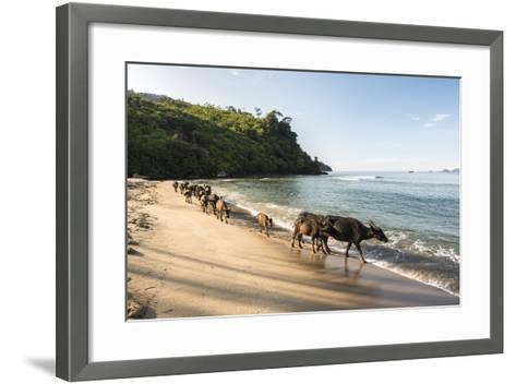 Water Buffalo on the Beach at Sungai Pinang, Near Padang in West Sumatra, Indonesia, Southeast Asia-Matthew Williams-Ellis-Framed Art Print