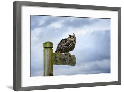 Eagle Owl, Raptor, Bird of Prey on Sign Post for Llewellyn'Swalk, Rhayader, Mid Wales, U.K.-Janette Hill-Framed Art Print