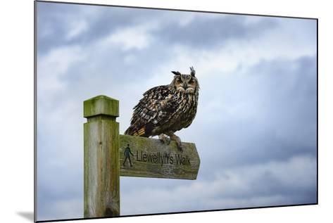 Eagle Owl, Raptor, Bird of Prey on Sign Post for Llewellyn'Swalk, Rhayader, Mid Wales, U.K.-Janette Hill-Mounted Photographic Print