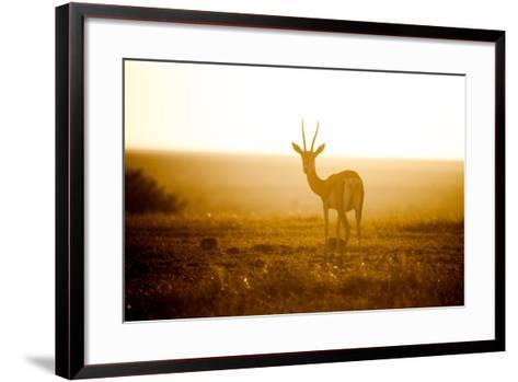 Springbok at Sunset, Kenya, East Africa, Africa-John Alexander-Framed Art Print