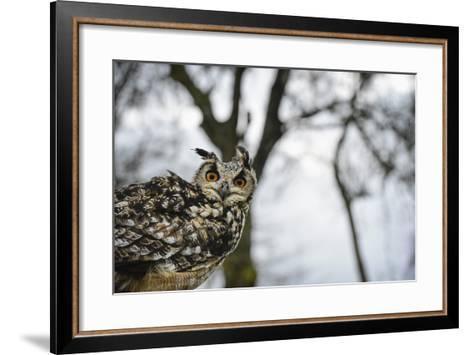 Eagle Owl, Raptor, Bird of Prey, Rhayader, Mid Wales, United Kingdom, Europe-Janette Hill-Framed Art Print
