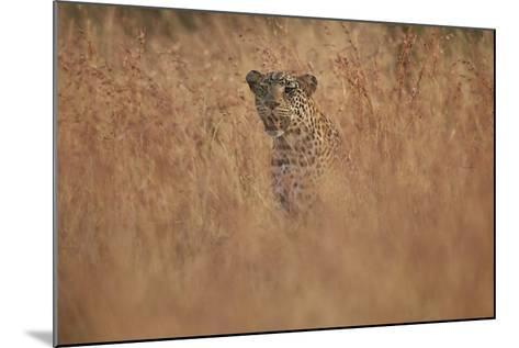 Leopard (Panthera Pardus) in Tall Grass, Kruger National Park, South Africa, Africa-James Hager-Mounted Photographic Print