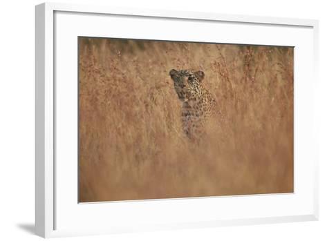 Leopard (Panthera Pardus) in Tall Grass, Kruger National Park, South Africa, Africa-James Hager-Framed Art Print
