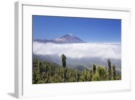View over Orotava Valley to Pico Del Teide, National Park Teide, Tenerife, Canary Islands, Spain-Markus Lange-Framed Art Print