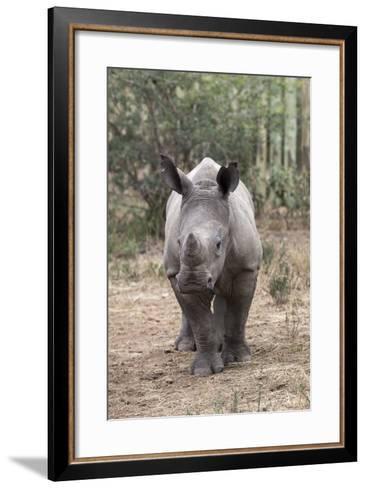 Ithuba, Thula Thula Rhino Orphanage, Kwazulu-Natal-Ann & Steve Toon-Framed Art Print