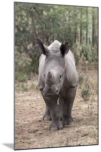 Ithuba, Thula Thula Rhino Orphanage, Kwazulu-Natal-Ann & Steve Toon-Mounted Photographic Print