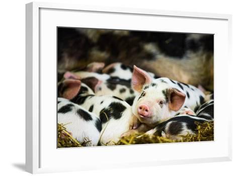 Piglets in Gloucestershire, England, United Kingdom, Europe-John Alexander-Framed Art Print