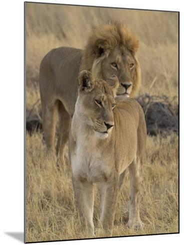 Female and a Male Lions (Panthera Leo) Standing in a Forest, Okavango Delta, Ngamiland, Botswana--Mounted Photographic Print