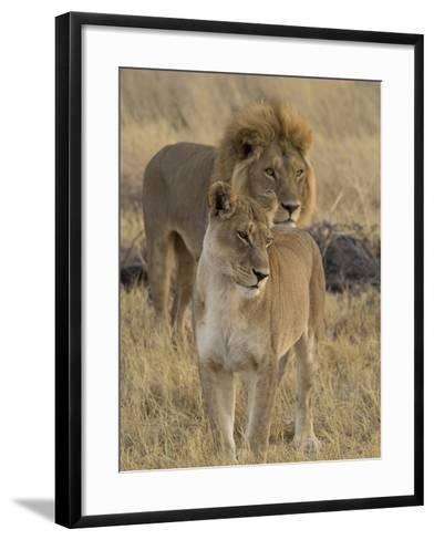 Female and a Male Lions (Panthera Leo) Standing in a Forest, Okavango Delta, Ngamiland, Botswana--Framed Art Print