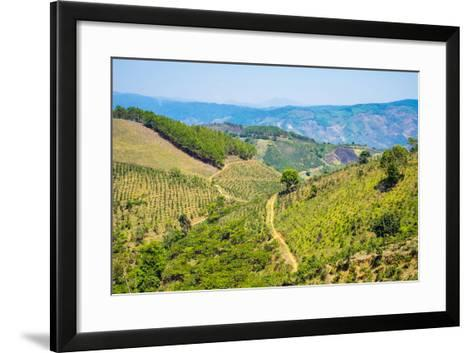 Coffee Plantations in Central Highlands, Lam Ha District, Lam Dong Province, Vietnam, Indochina-Jason Langley-Framed Art Print