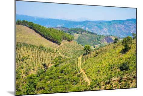 Coffee Plantations in Central Highlands, Lam Ha District, Lam Dong Province, Vietnam, Indochina-Jason Langley-Mounted Photographic Print