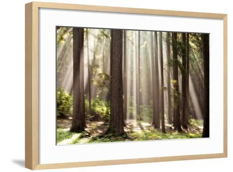 Forest Scene with Sun Rays Shining Through Branches--Framed Art Print