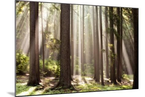 Forest Scene with Sun Rays Shining Through Branches--Mounted Photographic Print