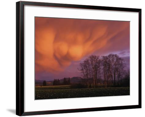 Mammatus Clouds in the Evening Light, Skagit Valley, Washington--Framed Art Print
