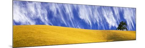 Cirrus Clouds over a Hillside, Templeton, San Luis Obispo County, California, Usa--Mounted Photographic Print