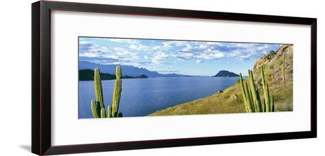 Cardon Cactus (Pachycereus Pringlei) on Hillside at Coast, Punta El Puertecito--Framed Art Print