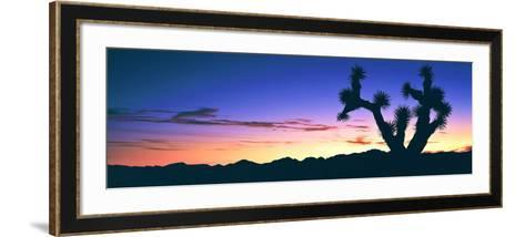 Lone Joshua Tree (Yucca Brevifolia) at Sunrise, Rainbow Basin Natural Area, Near Barstow--Framed Art Print