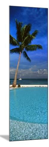 Palm Tree by a Pool Overlooking the Ocean, Tahiti, French Polynesia--Mounted Photographic Print