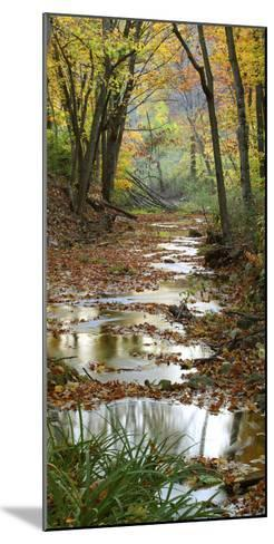 Autumn at Schuster Hollow in Grant County, Wisconsin, Usa--Mounted Photographic Print