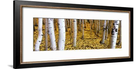 Aspen Grove, Cumbres Pass, San Juan Mountains, Colorado, Usa--Framed Art Print
