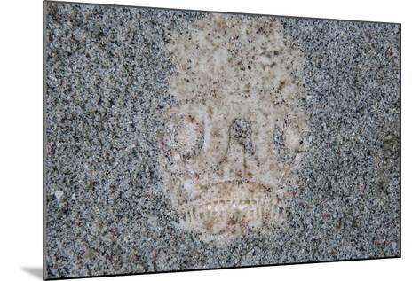 A Stargazer Fish Camouflages Itself in the Sand-Stocktrek Images-Mounted Photographic Print