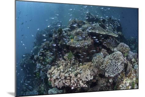 A Colorful Coral Reef Is Covered by Fish in Indonesia-Stocktrek Images-Mounted Photographic Print
